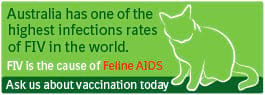 Australia has one of the highest rates of FIV infection in the world. FIV is the cause of Feline AIDS.  Ask us about vaccination against FIV today