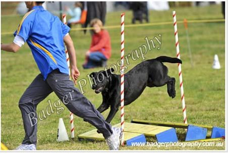 Zoe and Mindy doing an agility course