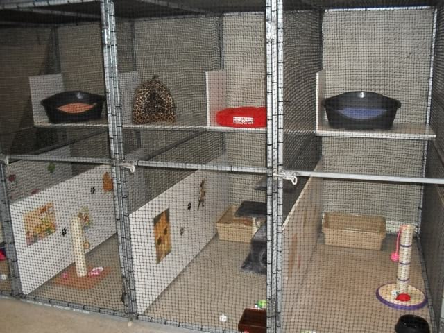 The cat hotel showing a few of the rooms together