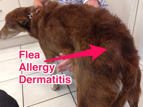 Allergic To Cats Symptoms