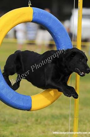 Mindy Jumping through a blue and yellow hoop