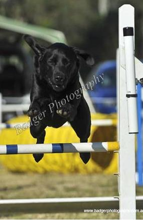 Mindy Jumping over a jump