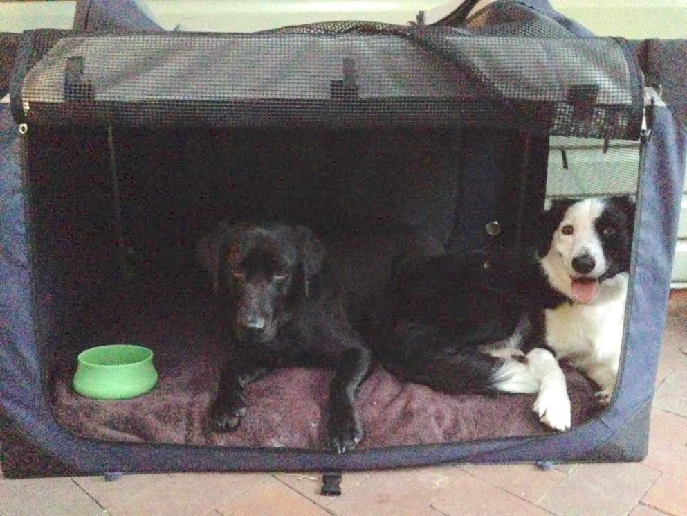 Zoe's dogs happily settled in their crate