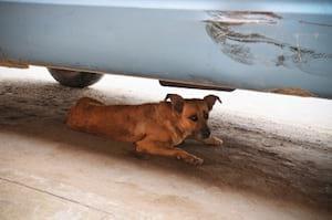 A scared dog hiding away