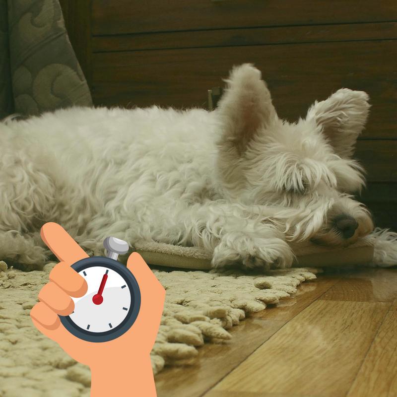 Checking your Dog's Sleeping Respiratory Rate | Companion Animal