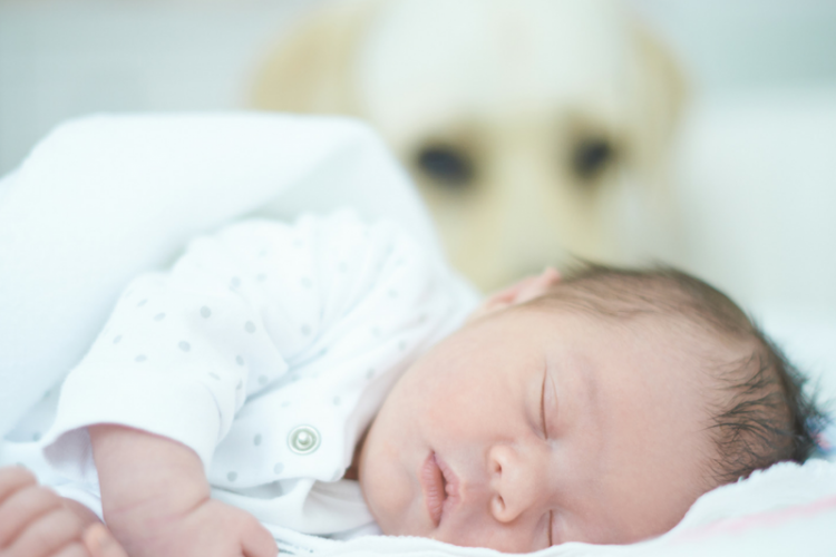 newborn baby with dog in background guarding