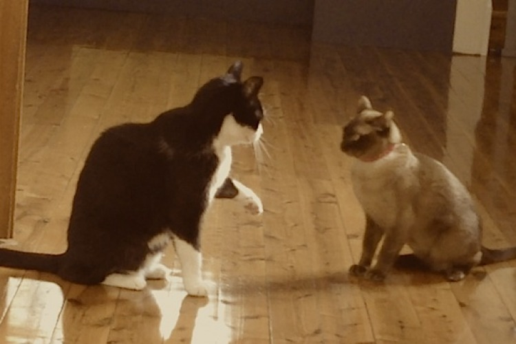 Cats play fighting
