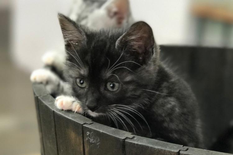 2 kittens in a wooden bucket