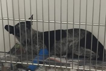 Dog being treated for parvovirus in isolation cage