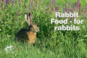 Rabbit in a field: Rabbit food- for rabbits