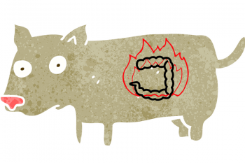 dog cartoon showing where the pancreas is located (in the dog's belly). Signs of pancreatitis are listed- vomiting, not eating, lethargic, pain in the belly