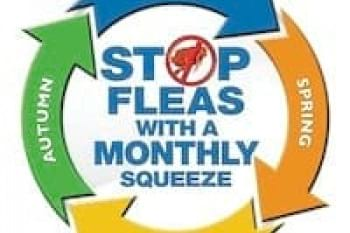 Stop Fleas with a Monthly Squeeze