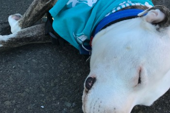 Greg having a rest at the million paws walk