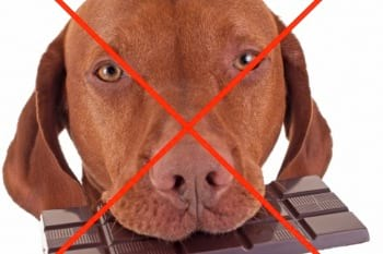 No chocolate for dogs