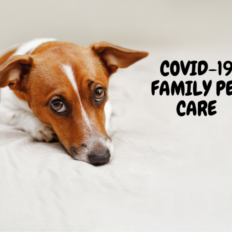 cute puppy dog with sad puppy dog eyes and the caption COVID-19 family pet care