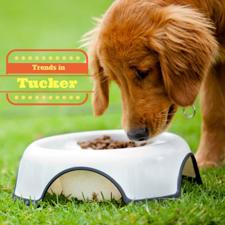 Trends in tucker- a young tan golden retreiver cross eating dry dog food from a white bowl on grass