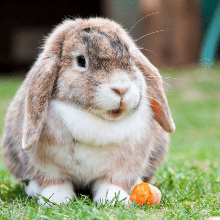 cute rabbit eating a carrot